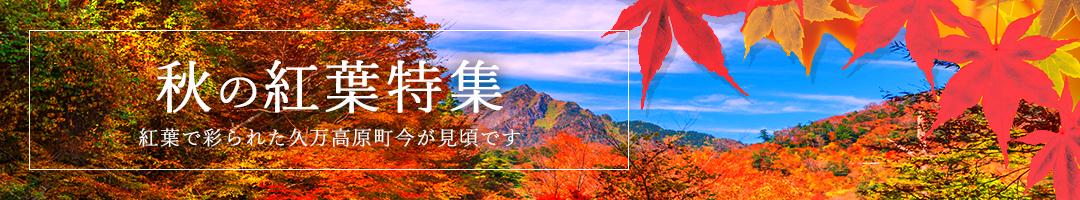 秋の紅葉特集 紅葉で彩られた久万高原町 今が見頃です