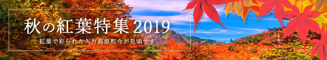 秋の紅葉特集2019。紅葉で彩られた久万高原町今が見頃です。